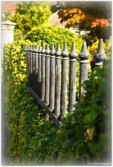 HFF (mayflower31) Tags: garten zaun fence