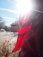 Santa Fe, New Mexico (Creativelena) Tags: chile city school food usa newmexico santafe tourism cooking america hotel native creative culture foodporn workshop culinary sustainable foodlover creativetourism santafecreativetourism creativetourismnetwork creativelenartw