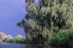 Danube Delta, Backwater Sontea. Delta Dunrii, Grla ontea (Cost3l) Tags: water river delta romania apa danube rau dunarea fluviu