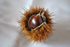 Time of chestnuts (pasta frolla) Tags: autumn brown cake fruit curly chestnuts chestnutcake chestnutflour