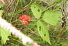 Berries (Heiterwanger See) (davidshort) Tags: wildflowers 2014 tryol heiterwang heiterwangersee