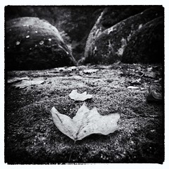 On the rocks (Light_Dust_Hunter) Tags: autumn rock automne pierre feuille finistere huelgoat