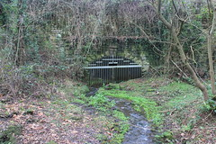 Drainage adit (Cefn Ila) Tags: colliery springvale cwmbran cwmbrancolliery