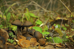 Mushrooms (peghq) Tags: autumn lake reflection fall nature beauty forest mushrooms colours armenia leafs parzlich