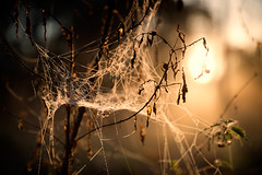 Rves d'automne (Regarde l-bas) Tags: autumn light sunset sun mist fog sunrise automne soleil lumiere crepuscule brume isere
