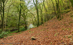 Fingle Woods (Ollie_57.. Slowly catching up) Tags: nov autumn trees england nature leaves canon woodland river landscape woods devon 7d dartmoor 2014 riverteign fingle ef24105mm ollie57