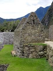 Machu Picchu-178