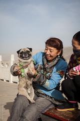 puppy (nicelnicel) Tags: china dog puppy tibet monastery tibetan qinghai tongren