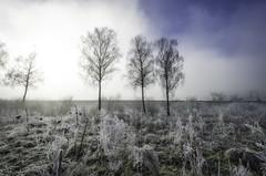 Frozen Day (m_haefeli) Tags: trees cold tree grass fog frozen nikon frost nebel angle zurich wide foggy wideangle gras birch zrich kalt eis weiss bume baum thur birke frostig winterthur weitwinkel 7000 gefroren eisig weinland kantonzrich 1024mm artctic altikon d7000 arktik thurtal niederneunforn nikond7000 neunforn 100240mm afsdx1024mm afs1024mm13545g