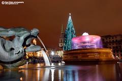 Trafalgar Square christmas tree (Nigel Blake, 14 MILLION...Yay! Many thanks!) Tags: christmas city light tree london festival festive square trafalgar celebration nigelblake nigelblakephotography