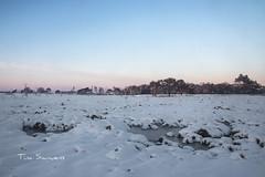 Kalmthoutse Heide (Tina_Sauwens) Tags: winter sneeuw heide kalmthout