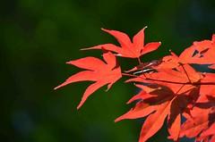 Couleurs d'automne au printemps