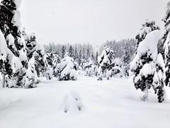 Heimdal, winter 2014!