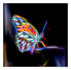 Electric Butterfly (SmokinToast) Tags: show park travel family blue winter light sunset