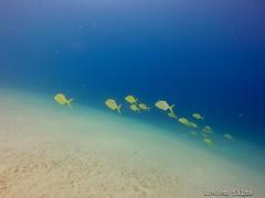 GOPR1433 (krakenfilms@yahoo.com.mx) Tags: mexico cabo underwater dive diving bajacalifornia scubadiving baja cabosanlucas buceo loscabos cursosdebuceo divecourses krakenfilms krakendivers buceorecreativo