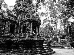 old library b&w (Niccol Mariotti) Tags: trip blackandwhite nature canon temple ruins asia cambodia ruin angkorwat jungle siemreap angkor wat cambogia