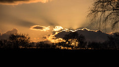 Ham Wall Sunset (me'nthedogs) Tags: sunset nature reserve somerset levels hamwall