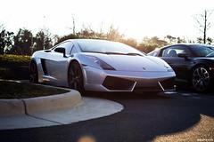 Lamborghini Gallardo (hsufotos) Tags: lamborghini gallardo carsandcoffee
