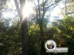 Nature #trees #treeporn #sun #sunporn #sky #skyporn #photography (Getoffthegridguy) Tags: trees sky sun photography treeporn skyporn sunporn