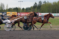 IMG_2733 (lovelymelancholy) Tags: horses horse hevoset hevonen horseraces ravit imrautio ravihevonen oulunravirata