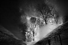 180 (you feel me) Tags: road trees blackandwhite reflection blancoynegro nature water germany puddle outdoors blackwhite photographer noiretblanc brandenburg 180 bnw biancoenero schwarzweis linow runkewitz