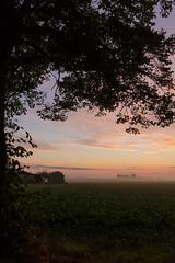 Misty morning (Infomastern) Tags: morning sky cloud mist fog rural sunrise landscape countryside himmel soluppgng morgon landskap dimma moln sdersltt landsbygd simlinge