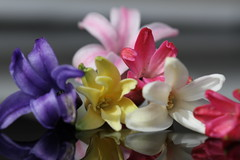 Happy Mothers Day to all Mothers! (CCphotoworks) Tags: pink white yellow petals spring purple blooms springflowers hyacinth macroflowers prettycolours florets springblooms fragrantflowers