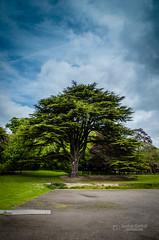 Yorkshire Sculpture Park #1 (tbnate) Tags: park sky sculpture tree nature clouds landscape outside nikon outdoor yorkshire westyorkshire yorkshiresculpturepark d5100 nikond5100 tbnate