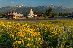 Dornan's 2015 with wildflowers (greggohanian) Tags: nationalpark wildflowers grandtetons tetons dornans balsamroots