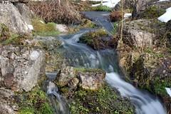 IMG_8946 (u.wittwer) Tags: park zoo schweiz switzerland tiere suisse tierpark heimat arth naturpark goldau widi