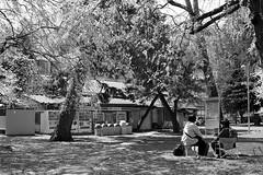 201604-01 (GenJapan1986) Tags: blackandwhite film japan spring university   cherryblossoms  miyagi  tohokuuniversity  ilfordhp5plus 2016      nikonnewfm2