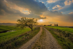 Il sentiero (marypink) Tags: sunset sky tree backlight clouds landscape tramonto pov path perspective cielo tuscany toscana valdorcia sentiero paesaggio sanquiricodorcia cappelladivitaleta nikond800 nikkor1635mmf40
