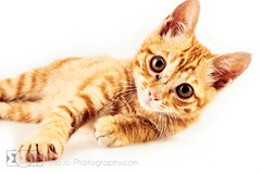 - JiuTong (elSimianRainbow) Tags: china guy home cat studio ginger little nine 9 guangdong shenzhen lives      jiutong
