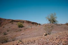 5R6K2949 (ATeshima) Tags: arizona nature havasu