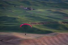 Floating Over the Palouse (llabe) Tags: paragliding dusk wheatfields steptoebutte easternwashington washington d750nikon