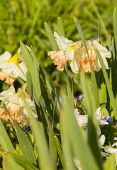 Multi-Colour (rumimume) Tags: morning flower canon spring pic niagara 2016 t2i rumimume