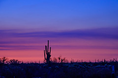 Twilight Bouquet (Carl Cohen_Pics) Tags: arizona cactus colors clouds canon florence spring twilight desert pinalcounty pinalpioneerparkway