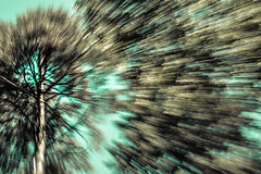 ESC_7847-3 (marco soraperra) Tags: wood sky abstract tree verde green texture nature forest nikon zoom minimal nikkor