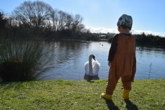 Swan (Heart felt) Tags: winter light newzealand children masterton earlyspring wairarapa springiscoming henleylake