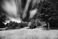 a very windy day (rainbow wasabi) Tags: windy weather clouds sky trees nature landscape blackandwhite monochrome oregon