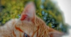 Kitten Snapseed via http://ift.tt/29KELz0 (dozhub) Tags: cat kitty kitten cute funny aww adorable cats