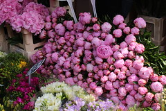 Peonies (Josiedurney) Tags: london spitalfields shoreditch east end art columbiaroad flowers market flowermarket summer uk england city capital hydrangeas tulips blue purple pink orange peonies acer plants money bunches roses red sky hipster july