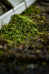 331/365 roof moss (sullivanj487) Tags: 365 nikon d5000 green growth moss roof perspective depthoffiled depth color