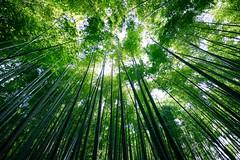 IMG_1236 (Jun.Ohashi) Tags: bamboo bambooforest garden green hokokuji kamakura temple              jp canon  eos eosm3 apsc efm1122mmf456isstm efm1122mm 1122mm efm f456 is stm