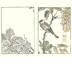 Chinese parasol-tree and Japanese grosbeak (Japanese Flower and Bird Art) Tags: flower chinese parasoltree firmiana simplex sterculiaceae bird grosbeak eophona personata fringillidae buncho tani nanga woodblock picture book japan japanese art readercollection