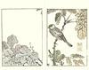Chinese parasol-tree and Japanese grosbeak (Japanese Flower and Bird Art) Tags: flower chinese parasoltree firmiana simplex sterculiaceae bird grosbeak eophona personata fringillidae buncho tani nanga woodblock picture book japan japanese art readercollection