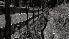 Der Weg am Zaun / The path along the fence (ludwigrudolf232) Tags: zaun licht schatten weg einfarbig