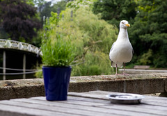 Stupid. (RokerEsp) Tags: gull seagull gaviota animal pjaro bird alas zoo rotterdam nature indiferencia