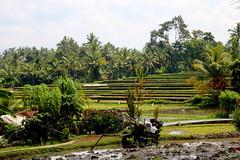 IMG_0277 (Marta Montull) Tags: holidays indonesia canon gopro malaysia kuala lumpur bali gili islands rice terraces temples monkey travel photography landscape