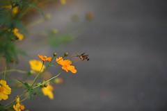 Cute moth () Tags: d750 flower 70200  nikon